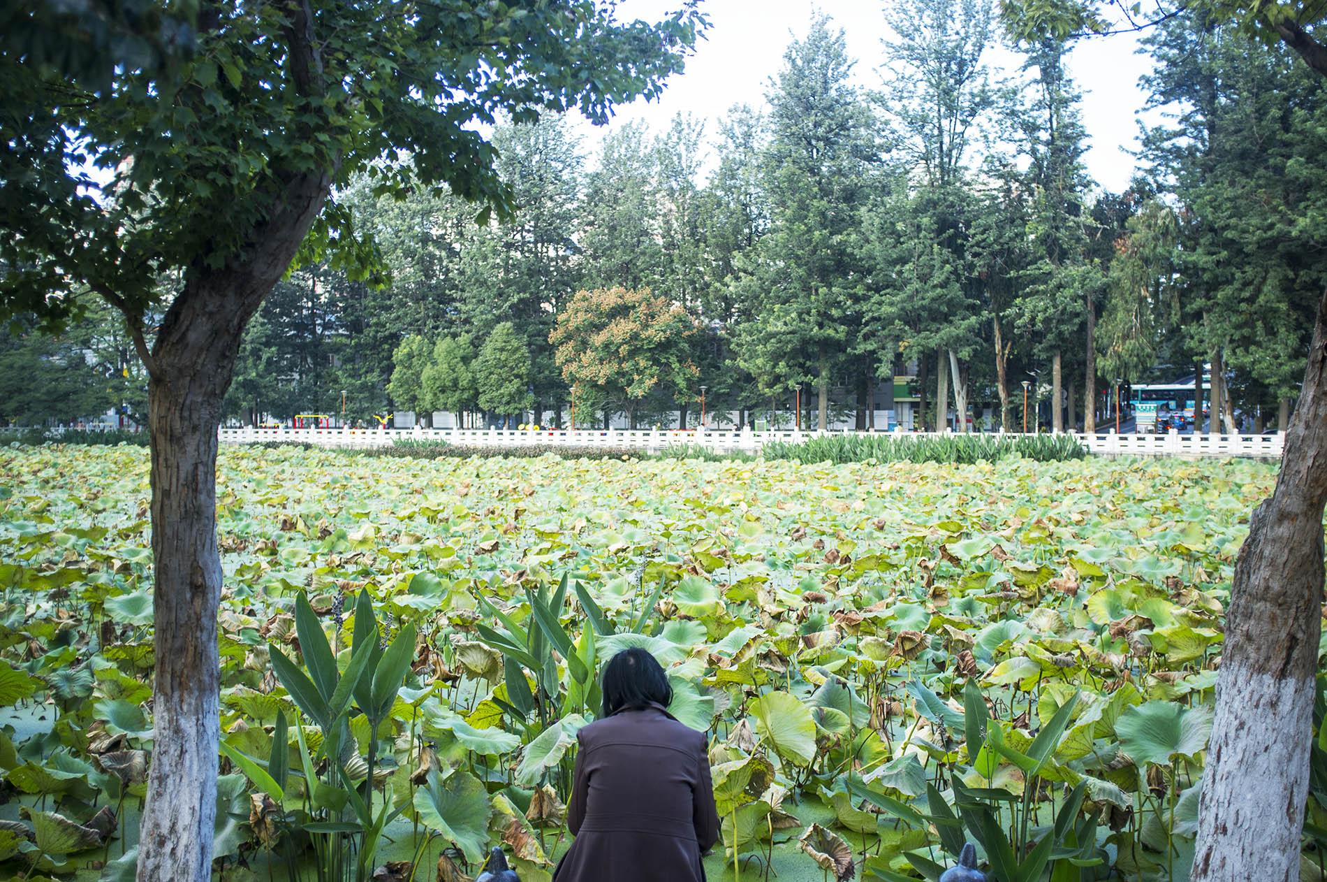 Lotus park.