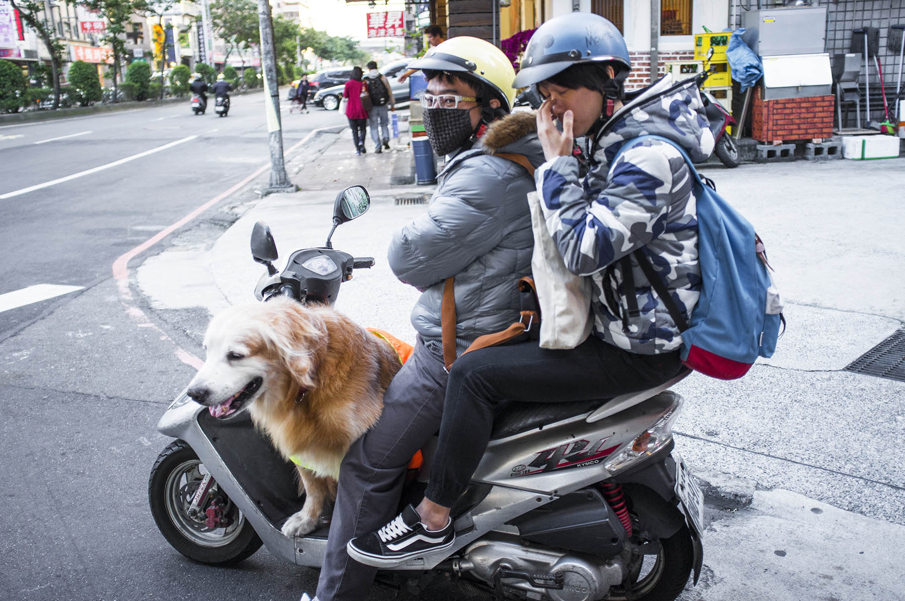 One of the typical set ups, dog is sitting in the legs of the driver.