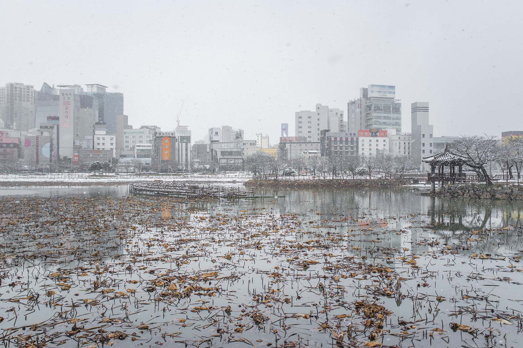 Lotus pond in the winter.
